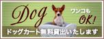 bnr_dog